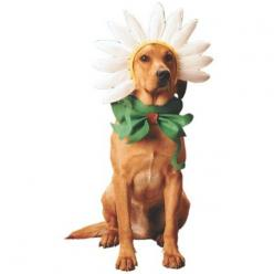 Dogs Daisy Costume: Pet Halloween Costumes Dogs, Halloween Dog Costume, Dogs Costumes, Daisy Dog, Costumes For Large Dogs, Dog Halloween Costumes, Daisies, Animal, Dog Costumes Halloween
