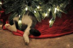 Enjoy the Holidays...but in moderation. Rofl. Idk what I'm doing, but this tree is making it much more fun!: Christmas Cats, Holiday, Kitty Cat, Animals, Pet, Funny, Cat Tree, Christmas Trees, Merry Christmas
