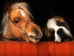 Friends :): St Bernards, Animals, Dogs, Best Friends, Miniature Horses, Ponies, Friendship, Saint Bernard, Animal Friends