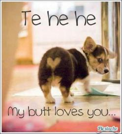Fun Claw - Funny Cats, Funny Dogs, Funny Animals: Funny Animal Pictures With Captions - 19 Pics: Corgis, Animals, Dogs, Love You, Pet, Corgi Butt, Funny, Puppy, Heart Butt