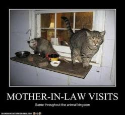 funny animal captions: Animal Lover Humor, Funny Cats, Mother In Law, Funny Stuff, Funny Quotes, Cat Laughs, Funnies, Funny Animal, Cat Stuff