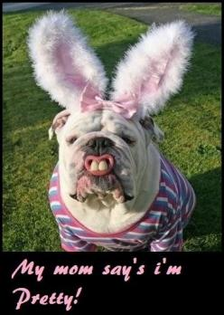 Funny animal pictures, photos, funny images, pics of animals, baby animals, hilarious picture: Animals, Bulldogs, Funny Stuff, Funnies, Bunnies, Happy Easter, Easter Bunny