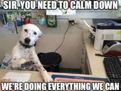 Funny animals: Funny Animals, Dogs, Calm Down, Funny Stuff, Funnies, Humor, Customer Service, Photo