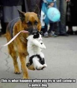 Funny animals, funny pics, hilariousness, funny jokes, jokes funny, humor cats, hilarious cats …: Cats, Funny Animals, Friends, Dogs, Stuff, Pets, German Shepherds, Funnies