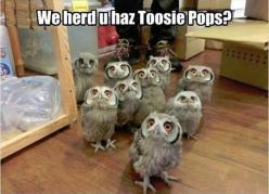 funny animals: Tootsie Pops, Animals, Funny Stuff, Funnies, Harry Potter, Humor, Owls