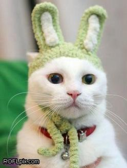 funny cat rabbit #funny: Rabbit, Animals, Funny Cats, Pets, Funnies, Bunnies, Kitty, Easter Bunny