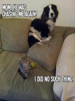 Funny: Cats, Funny Animals, Dogs, Pet, Funny Picture, Funnies