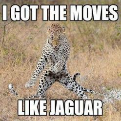 Funny cats, funny pics, hilariousness, humour animal, jokes funny …For more funny quotes and pics visit www.bestfunnyjokes4u.com/rofl-best-funny-joke-pic/: Jaguar, Funny Animals, Cat, Funnyanimal, Funny Stuff, Humor, Funnies