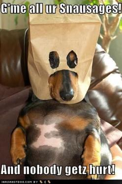 Funny Dog Pictures haha!: Animals, Weenie Dog, Funny Dogs, Dachshund, Doxies, Funnies