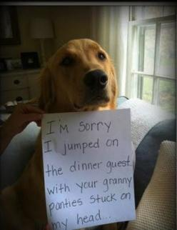 funny dog shame granny panties picture   ...........click here to find out more     http://googydog.com: Animals, Dog Shaming, Pet, Funny Stuff, Funnies, Funny Animal, Granny Pantie