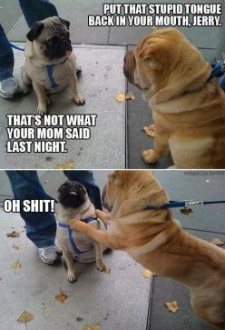 Funny dogs: Animals, Giggle, Dogs, Funny Stuff, Funnies, Pugs, Humor