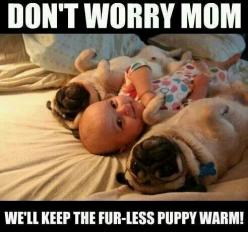 Funny dogs: Babies, Animals, Dogs, Stuff, Pet, Funny, Puppy, Pugs, Things