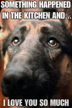 funny-dogs-in-the-kitchen.jpg   ...........click here to find out more     http://googydog.com: Face, Animals, Dogs, I Love You, Pet, Funny, Kitchen, German Shepherd