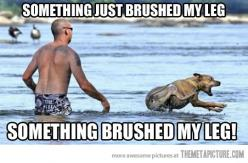 Funny!: Giggle, Animals, Dogs, Funny Stuff, Lake, Funnies, Humor, Things