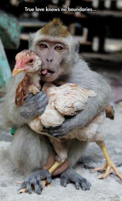 Funny Pictures of the day -101 pics- True Love Knows No Boundaries: Chicken, Funny Animals, Adorable Animals, Funny Pictures, True Love, Humor, Photo, Monkey, Friend