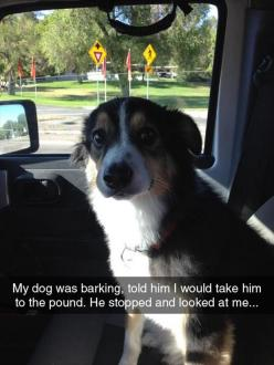 Funny Pictures Of The Day - 53 Pics  awe, poor baby!  just kidding.: Funny Animals, Dogs, Funny Pictures, Funnypictures, 53 Pics, Funnies, Dump A Day