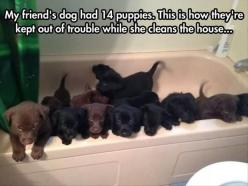 Funny Pictures Of The Day - 84 Pics: My Friend, 14 Puppies, Animals, Friends, Dogs, Clean, Funny, Puppys, Friend S Dog