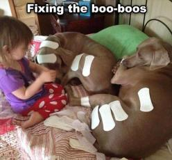 Funny Pictures Of The Day – 91 Pics ha ha ha: Animals, Dogs, Funny Stuff, Funnies, Humor, Kid