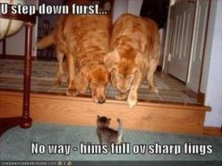 funny scared animals (12): Cats, Kitten, Animals, Dogs, Pet, Funny Stuff, Funnies, Funny Animal, Golden Retriever