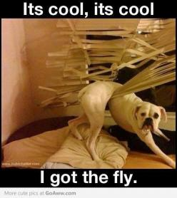 Funny - when it's someone else's dog .. and house ;-).....omg!!!! Exact same thing happened to my blinds via our boxer dexter...missing my baby: Animals, Dogs, Pet, Boxer, Funny Stuff, Humor, Funnies