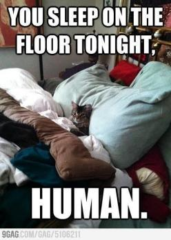 ha   ...........click here to find out more     http://googydog.com: Cats, Animals, Funny Cat, Bed, Funny Stuff, Funnies, Funny Animal, Kitty
