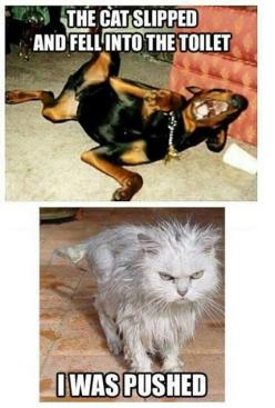 Ha ha this is soo Ariel and jadie: Cats, Funny Animals, Dogs, Pet, Funny Stuff, Funnies, Humor