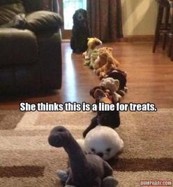 Haha: Animals, Dogs, So Cute, Pet, Funnies, Funny Animal, Treat