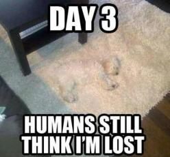 Hahahahaha!!! I feel sorry for his owners who are probably worried sick about him when really he's just been on the rug! :): Animals, Lost, Dogs, Funny Stuff, Funnies, Humor, Things, Funny Animal