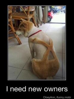 hahahahaha...: Poor Doggy, Giggle, Dogs, Funny, Poor Thing, Poor Guy, Haircut, Animal