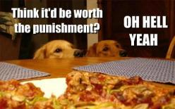 Have to repin this because it couldn't look more like Remy and Jake! @Vicki Watson and @Ashley Watson: Hell Yeah, Animals, Dogs, Pet, Funny Stuff, Funnies, Humor, Worth It