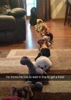 He thinks he has to wait in line to get a treat...: Animals, Dogs, So Cute, Pet, Funnies, Funny Animal, Treat