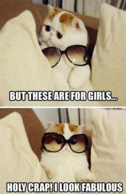 Holy crap! I look fabulous!: Cats, Animals, So Cute, Funny Stuff, Funnies, Fabulous, Holy Crap