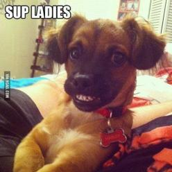 How I feel women see me when I try to talk to them: Funny Animals, Dogs, Funny Picture, Cheese, Puppy, Funnies, Smile