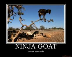 http://www.neeny.com/contents/member/OliviaWilliams/photos/Ninja-Goat-4515a0.jpg: Picture, Funny Animals, Funny Pics, Climbing Trees, Climbing Goats, Tree Goats, Humor, Funnies