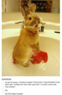 Human. you stop that this instant!: Rabbit, Emma Kate, Funny Bunnies, Bunny Bath, Dexter Funny, Pet, Collar, Animal
