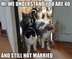 I'm actually dying of laughter cause this will be me: Crazy Cats, Animals, Catlady, Funny Stuff, Humor, Funnies, Crazy Cat Lady