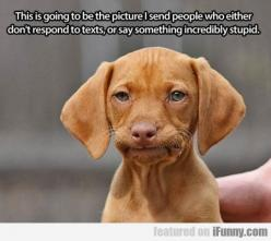 I am obsessed with this picture.: Animals, Dogs, Faces, Funny Stuff, Humor, Puppy, Funnies, Things