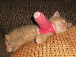 I brokeded my arm!: Cats, Animals, So Cute, Pet, Poor Kitty, Kittens, Poor Baby, So Sad