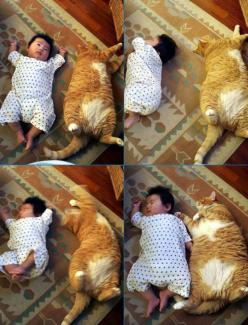 i cannot not pin this cat copying a baby ♥    http://www.buzzfeed.com/mentos/20-pictures-that-will-make-you-feel-happy: Copy Cat, Babies, Animals, Pet, Funny, Funnies, Fat Cats, Kids, Things