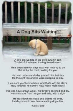 I cried reading this. Some people are disgusting to do that to those poor animals. IF YOU DONT WANT YOUR DOG, FIND SOMEONE FAITHFUL WHO DOES. Dont make them suffer waiting.: Animals, Dogs, Animal Rights, Quotes, Pet, My Heart
