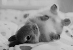 I had a dream that someone gave me a white bunny wrapped in paper inside of a red purse.....: Rabbit, Animals, So Cute, Pet, Baby Bunnies, Baby Animal, Adorable, Things
