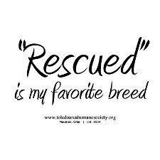 I have four rescue dogs. In 2011, I directly saved the lives of 5 dogs and 4 cats by fostering and transporting, and logged at least 50 volunteer hours for animal rescue organizations. In 2012 I hope to do more, despite being at my limit and no longer bei
