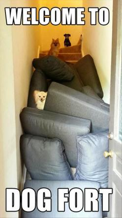 I imagine these dogs pulling them off the upstairs couch. Hysterical!!! Doggie fort!: Funny Animals, Dogs, Strong, Dog Fort, Dogfort, Funny Picture, Funny Stuff, Funnie