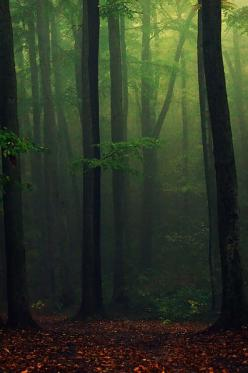 I Like It Wild And Natural...Always In The Country !... http://samissomarspace.wordpress.com: Green Wood, Forests, Dark Forest, Tree, Dark Wood, Photo, Green Mist