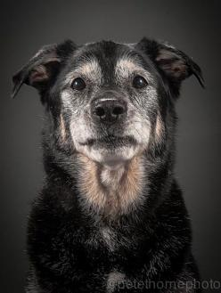 I love senior dogs. I wish everyone saw the value in them and would adopt!: Photos, Animals, Old Dogs, Photographer Pete, Senior Dog