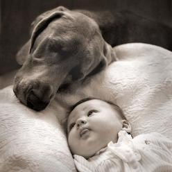I think dogs are the most amazing creatures; they give unconditional love.  For me they are the role model for being alive. ~ Gilda Radner: Picture, Babies, Animals, Sweet, Dogs, Pet, Photo, Friend