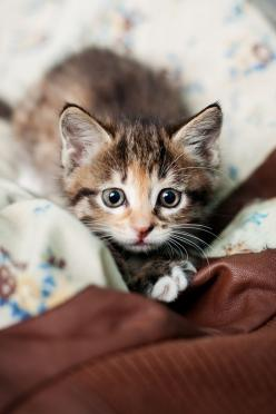 I want this little one<3: Kitty Cats, Hunters, Animals, Sweet, Olga Korzhova, Pet, Kitty Kitty, Baby Cat
