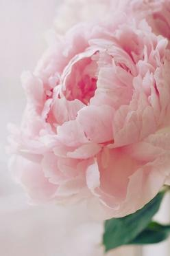 """I wanted to have something good to remember about today, Sometimes you have to provide such moments yourself."": Beautiful Flower, Pink Flower, Rose, Wedding, Flowers, Garden, Pink Peonies, Favorite Flower"