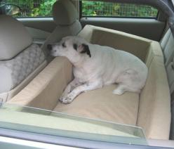if I were a dog, I would totally want this. Hell, I could enjoy that for sleeping during road trips.: Car Seat For Dog, Road Trips, Road Trip Dog, Car Dog Bed, Dog Car Seat, Custom Dog Bed, Dogs Bed, Dog Road Trip, Dog Car Bed
