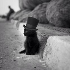 If that isn't the cutest cat in a hat!: Animals, Cupcake, Tops, Black Cats, Top Hats, Kittens, Kitty, Blackcat